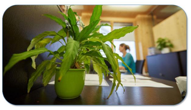 Verzorg je planten en bestrijd de hitte op kantoor