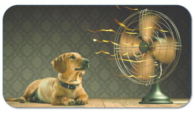Bestrijd de hitte op kantoor met verkoelende ventilatoren