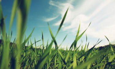 Verpakken met graspapier? Laat er geen gras over groeien